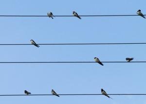 Des oiseaux sur un fil (Pixabay)